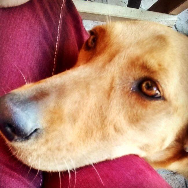 Me enamoré completamente de su mirada dulce, era un amorrrrr y si pudiera me la llevaría ? Dog Perro Animal Migou