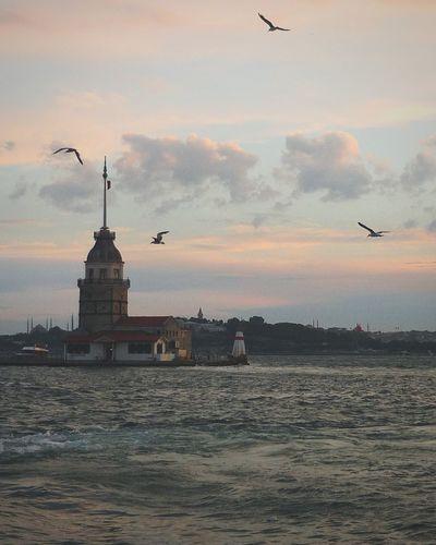 Стамбул девичья башня Architecture Istanbul Bosphorus Flying Bird Sunset Sky Outdoors No People Water Day Nature First Eyeem Photo EyeEmNewHere