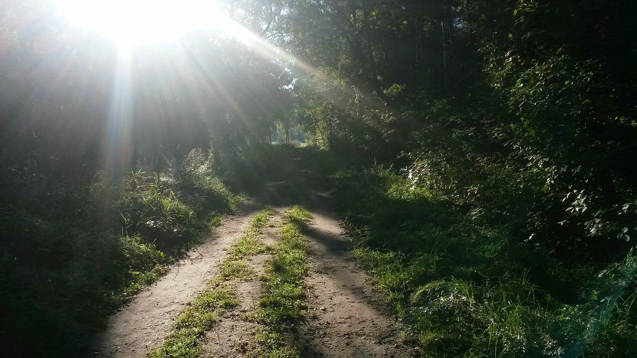 the way forward, nature, sunlight, sunbeam, tranquility, tranquil scene, day, beauty in nature, sunny, landscape, plant, grass, no people, scenics, growth, sun, outdoors, tree, forest
