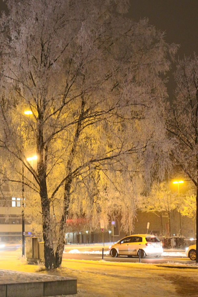 City Life Cold Icy Trees Illuminated Nature Night On The Way Home Outdoors Road Scenics Street Light Transportation Winter