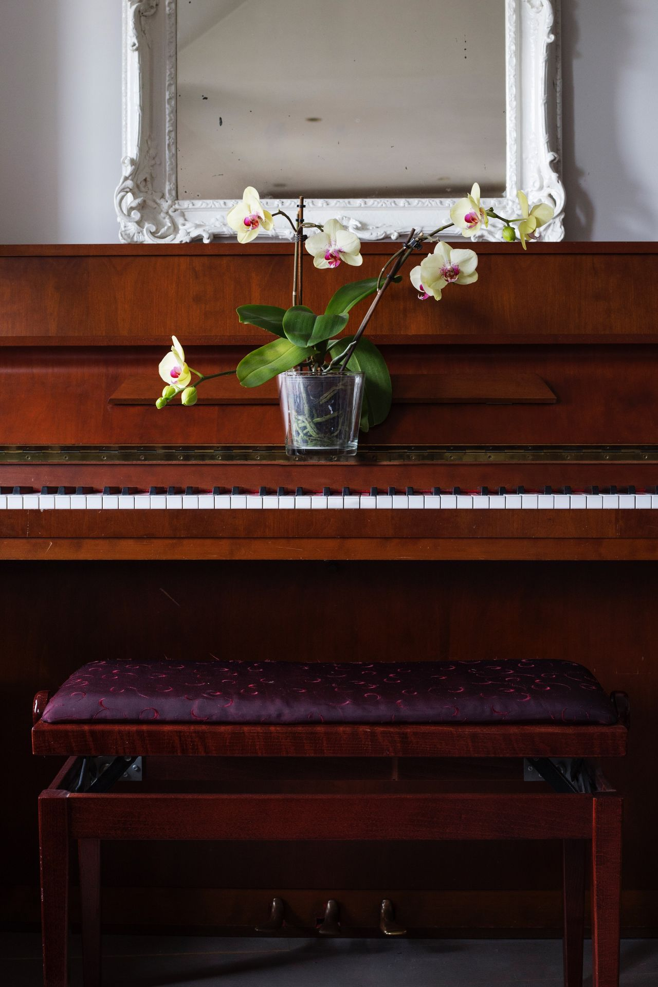 Piano Moments Flower Indoors  No People Plant Nature Growth Freshness Orchid Orchids Zen Piano Keyboard Architecture Day