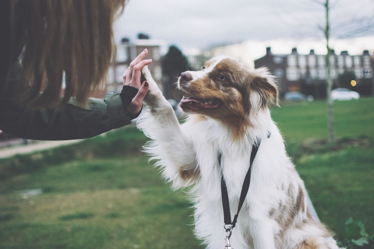High five! 🙏 EyeEm EyeEm Best Shots Showcase April Things I Like Photo Animals Pet Dog Welcomeweekly Eye4photography  Walking Around Well Turned Out Taking Photos Photooftheday Vscocam Eyemphotography Photography The Week On Eyem EyeEm Nature Lover Nature First Eyeem Photo Love Bestfriend Highfive Inspirational