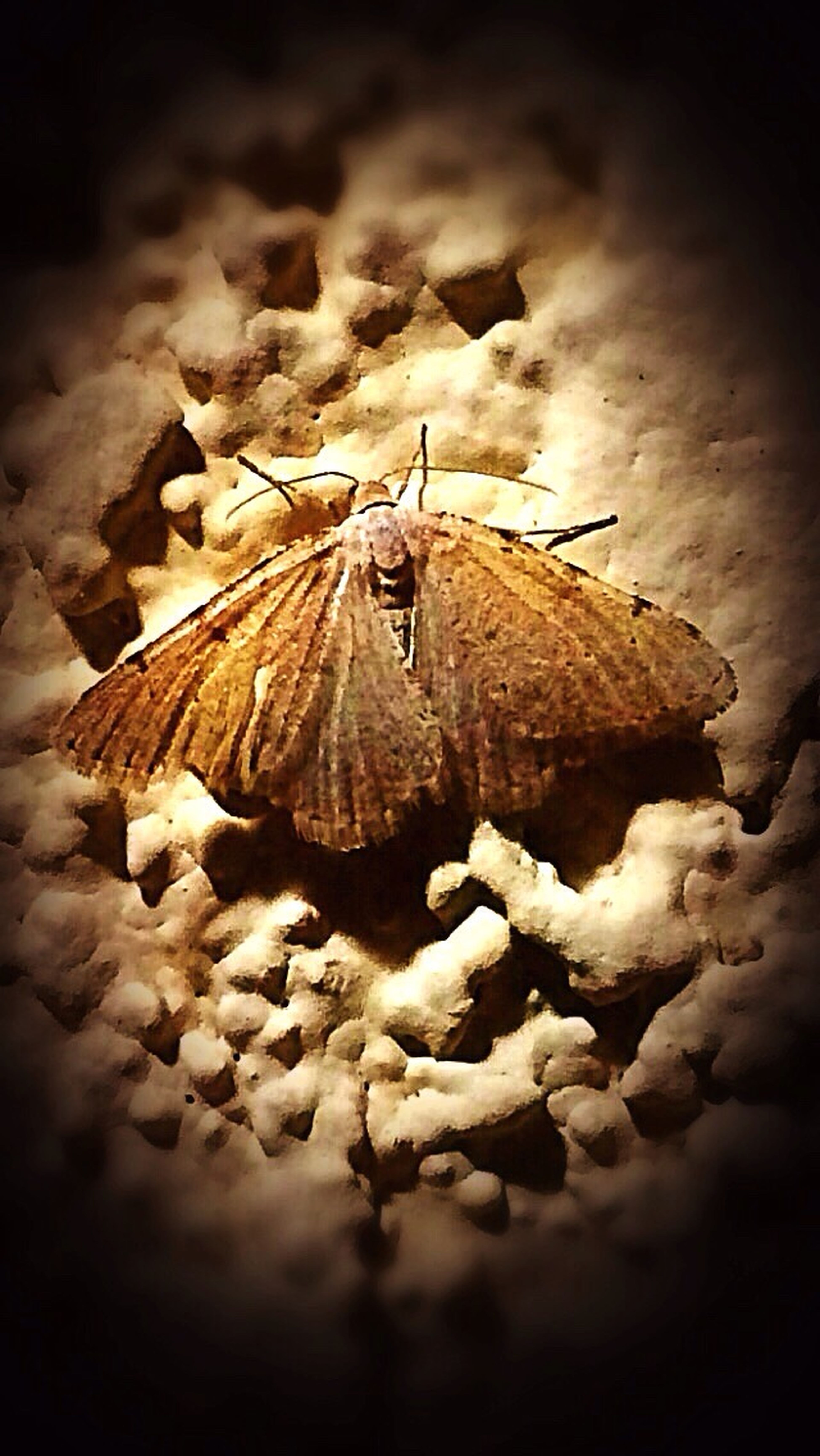 Little Brown Moth hanging Outside Work last night, loving the night Nature. Even in its smallest creatures✨... Nature Moth Beauty In Nature Night Photography Night Insects IPhone Photography One Person Alone In The Dark At Peace With Myself  Discovering Solitude And Silence Cool Night Picture Moth Close Up