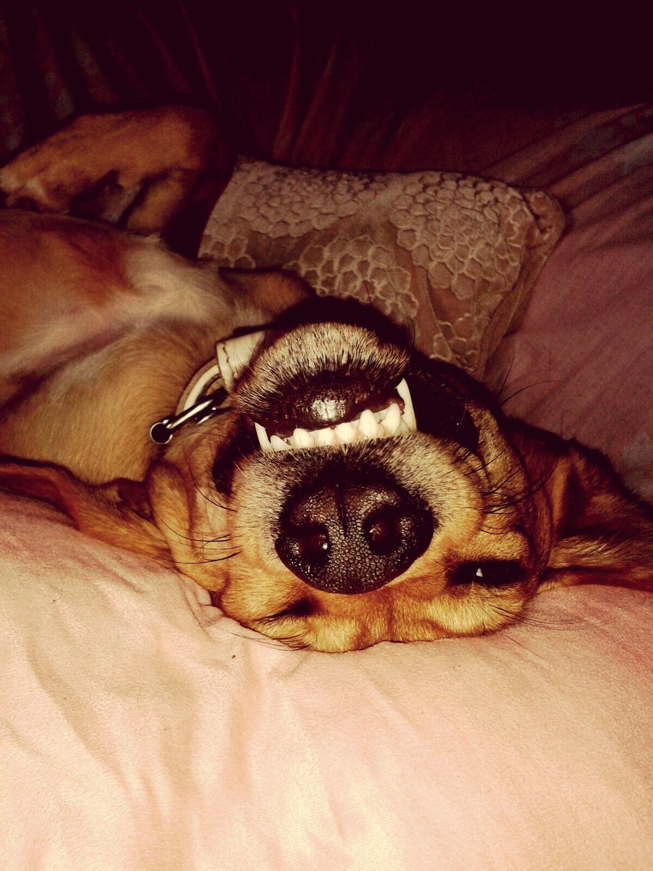 I Love My Dog Dogoftheday Relaxing Enjoying Life Happiness Hollandsnextdogmodel