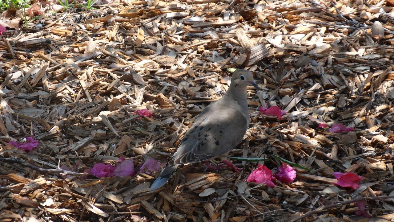Birds_collection Nofilter#noedit Taking Photos Natur!!