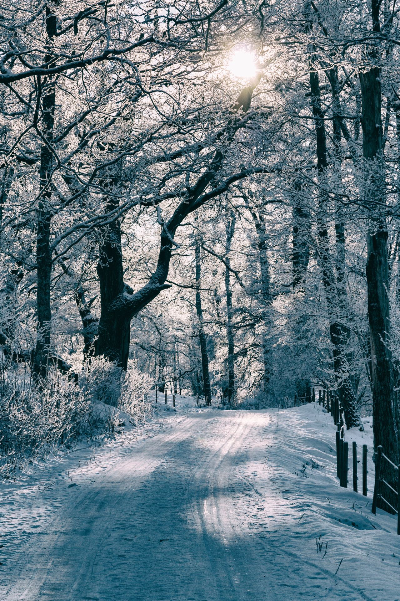 Snow Winter Cold Temperature Tree Nature Beauty In Nature Weather Sunlight Sunbeam Branch Scenics Bare Tree Outdoors Landscape Drastic Edit EyeEm Best Edits First Eyeem Photo Hello World Finding New Frontiers The Way Forward Tranquility Tranquil Scene Idyllic Scenic Sun