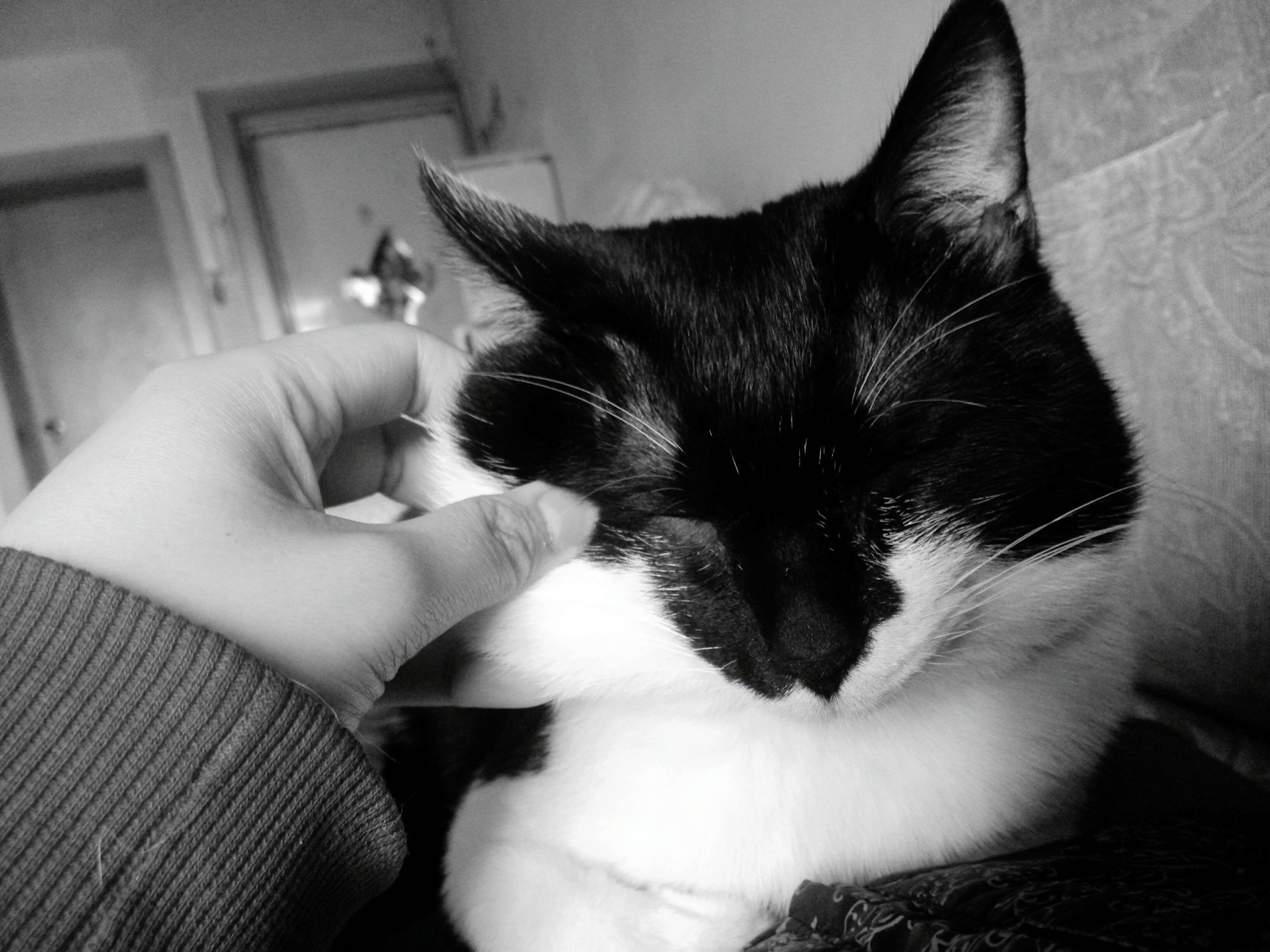 pets, domestic animals, one animal, animal themes, person, indoors, mammal, domestic cat, part of, holding, cat, unrecognizable person, home interior, close-up, human finger, dog, relaxation