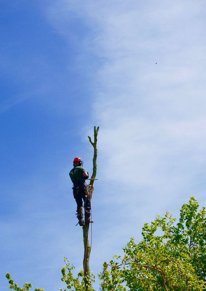 Chain Saw Day Full Length Garden Low Angle View Lumberjack Men One Man Only One Person Outdoors People Real People Sky Tree Tree Surgeon