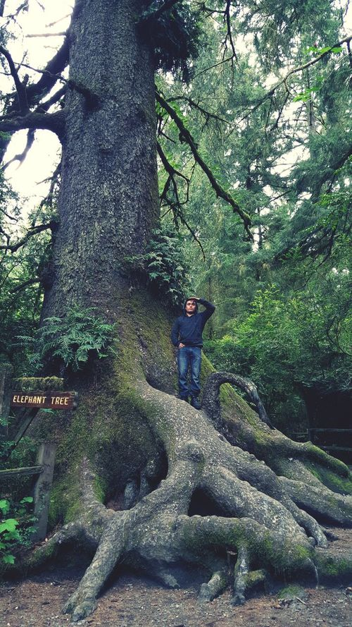 California Redwoods Gianttree Nature_collection California WOW Exploring
