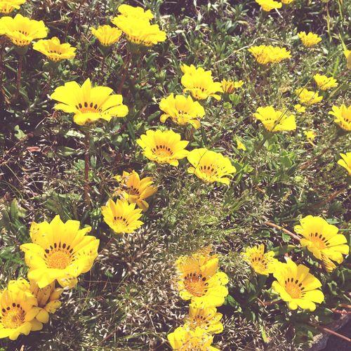 ちょっとフィルターかけてみたり 花 はな Flowers