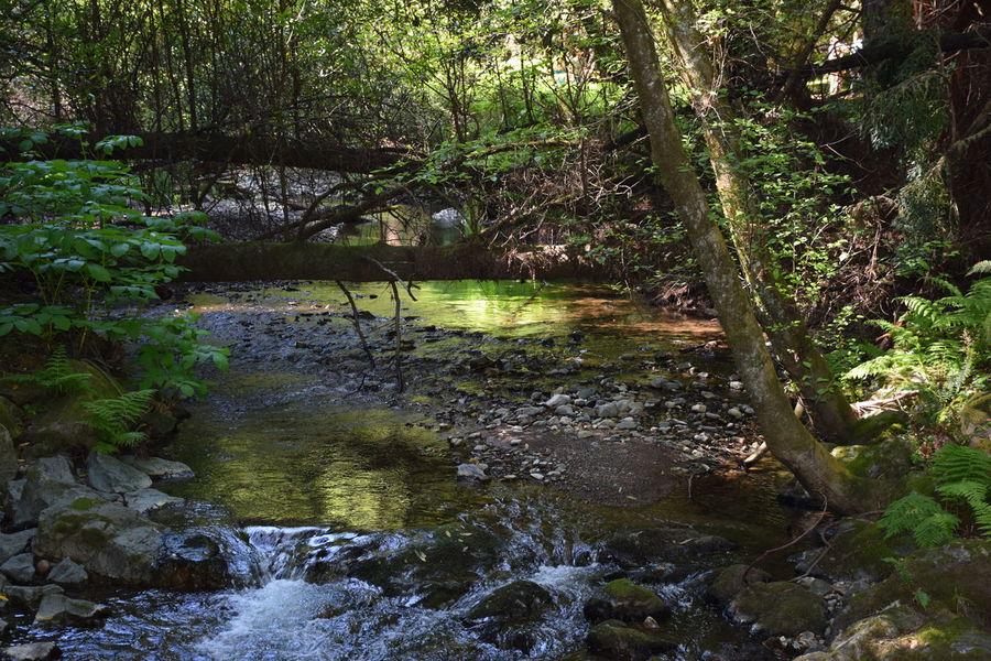 muir woods Sunrays Travel Destinations Water Reflection California Woods Muir Growth