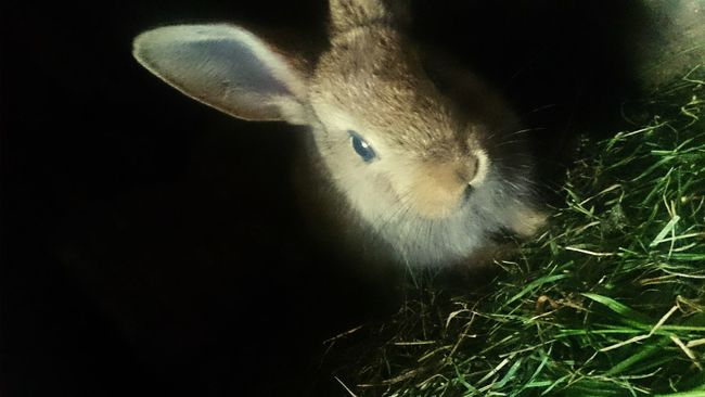 My Sweet Pets My Rabbit Hi! Check This Out Hanging Out Cheese! Relaxing Hello World Holiday Hi! Taking Photos Photography Challenge