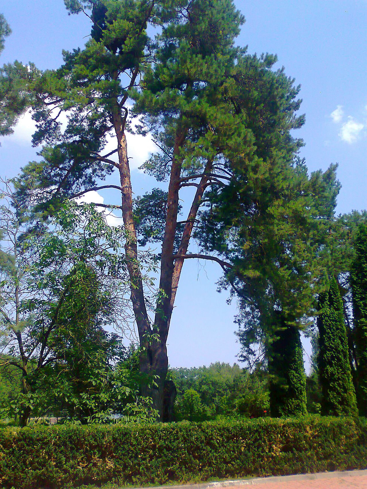 Дерево 🌲 Tree Green Color Growth Nature Outdoors Day Low Angle View