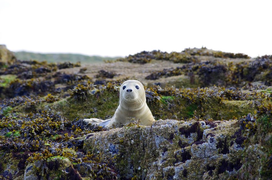 Beautiful stock photos of seal,  Animal Themes,  Animals In The Wild,  Beauty In Nature,  Day