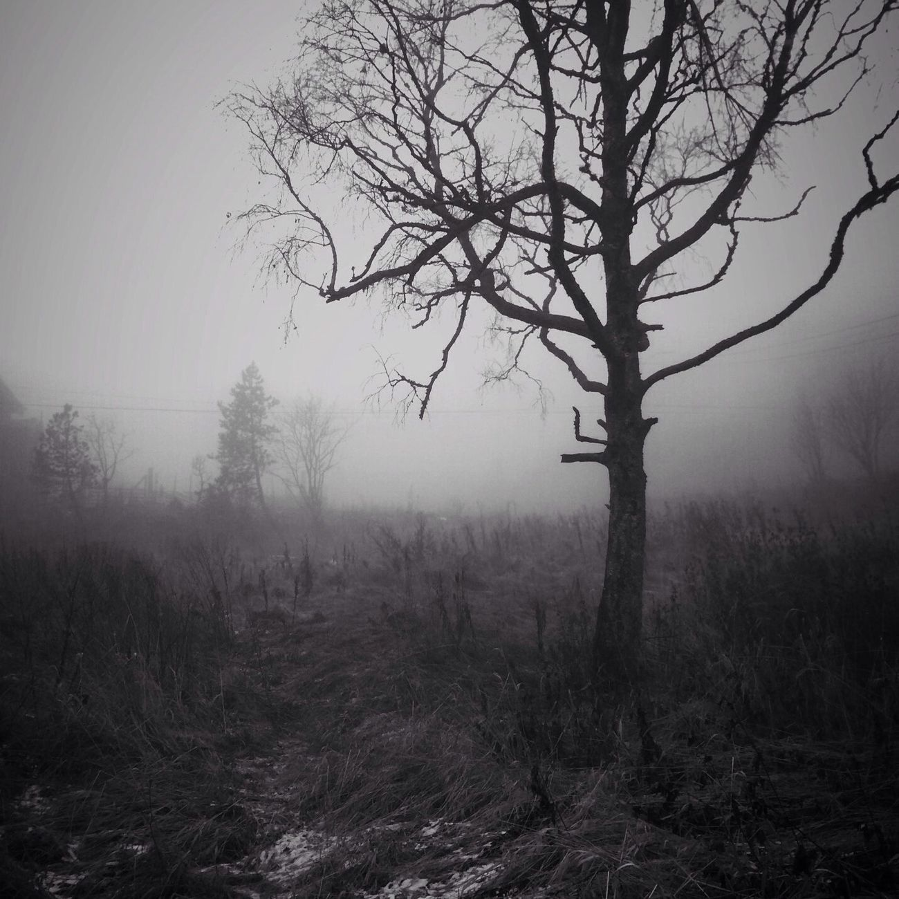 Black And White Nature AMPt_community Chasing Fog