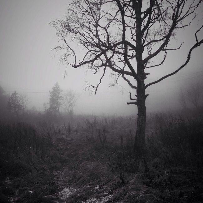 Black And White Nature AMPt_community Chasing Fog
