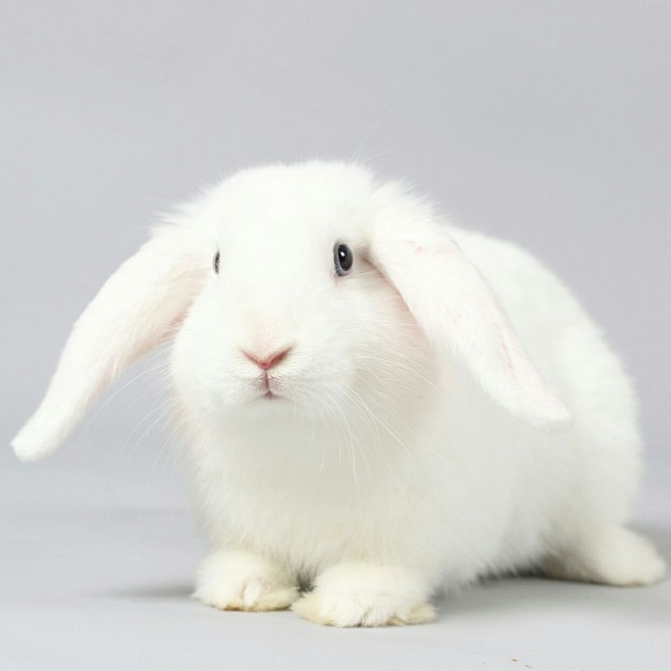 Beautiful stock photos of easter bunny, Animal Themes, Domestic Animals, No People, One Animal