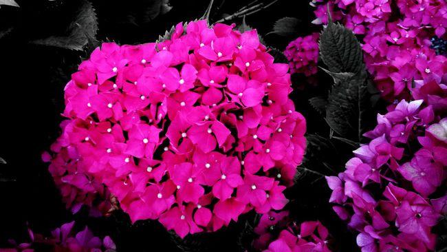 Rose rose rose...... Flower Fragility Beauty In Nature Petal Springtime Vibrant Color Botany Pink Enjoying Life ♥ Nature Makes Me Smile Naturemakesmehappy Tranquility Inmygarden