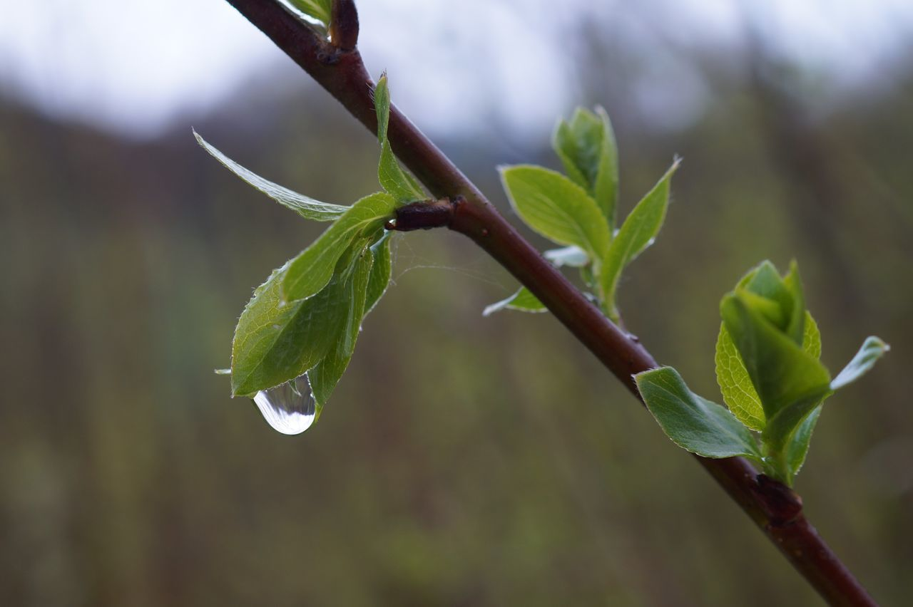 leaf, green color, growth, plant, nature, focus on foreground, close-up, no people, day, outdoors, beauty in nature, fragility, freshness, animal themes