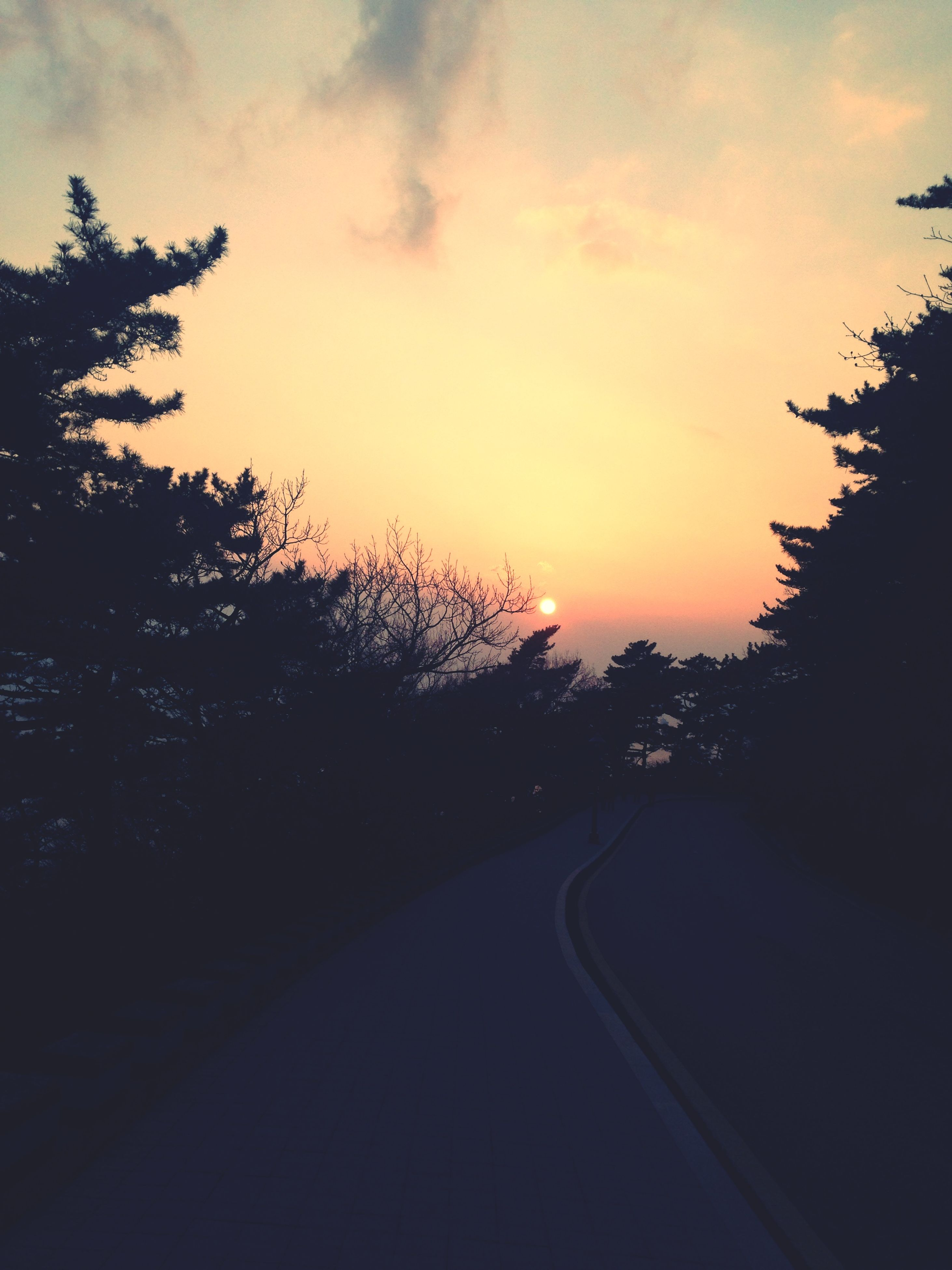 transportation, the way forward, road, sunset, sky, tree, silhouette, diminishing perspective, road marking, cloud - sky, vanishing point, tranquility, country road, nature, car, street, tranquil scene, beauty in nature, cloud, dusk