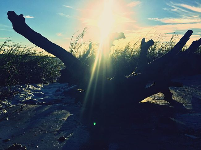The view from my run this morning along the South Savannah River Channel Riverside Driftwood Sun Glare IPhoneography