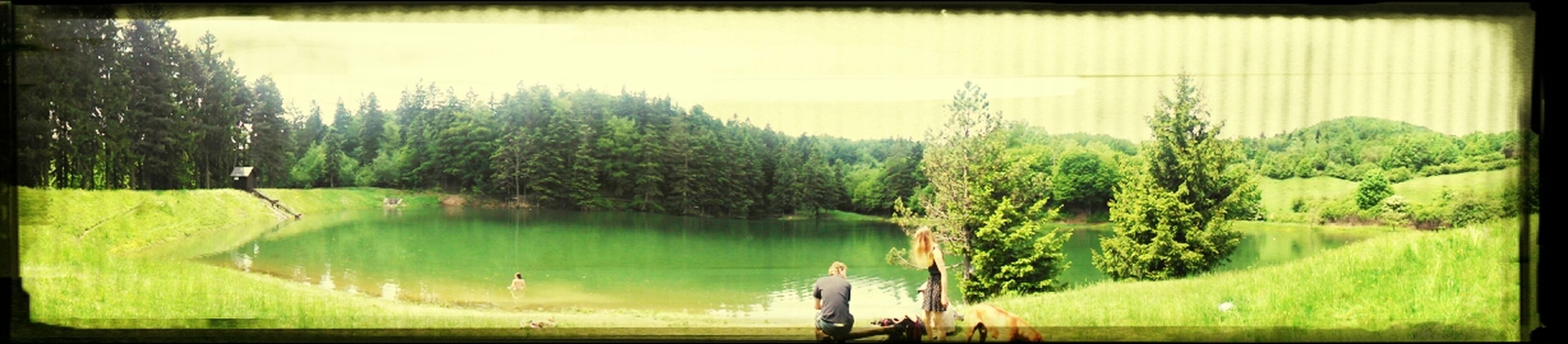 transfer print, water, auto post production filter, tranquility, tranquil scene, tree, scenics, beauty in nature, nature, grass, lake, panoramic, green color, growth, idyllic, sky, plant, landscape, leisure activity