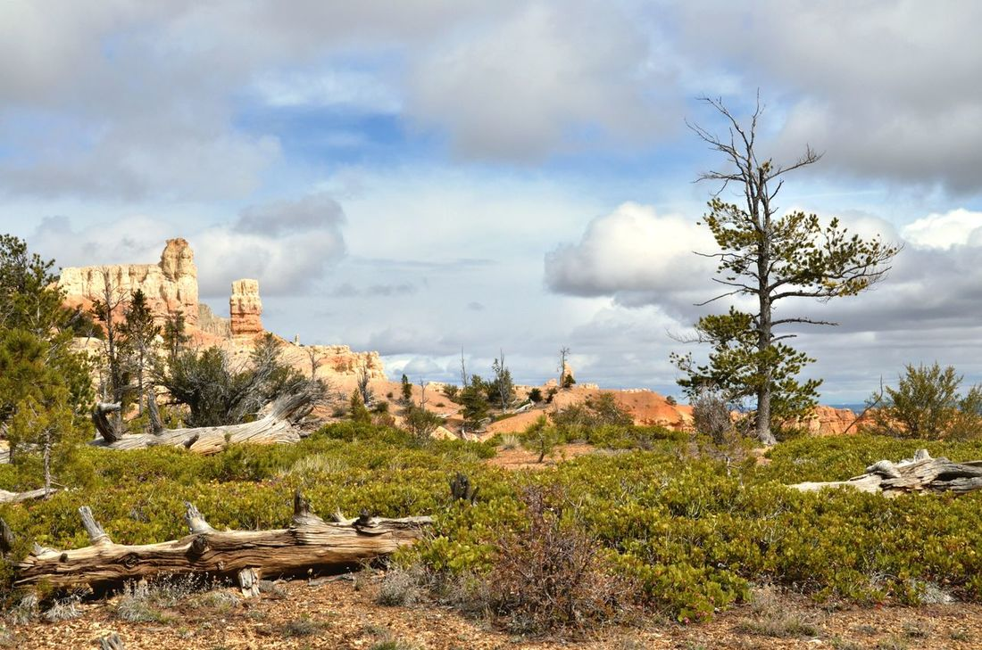 Cloud - Sky Tree Nature Landscape Outdoors Plant Scenics Beauty In Nature SrnkaScenery Outdoor USA Bryce Canyon National Park, Brycecanyon Died Tree Rock - Object Rock Formation