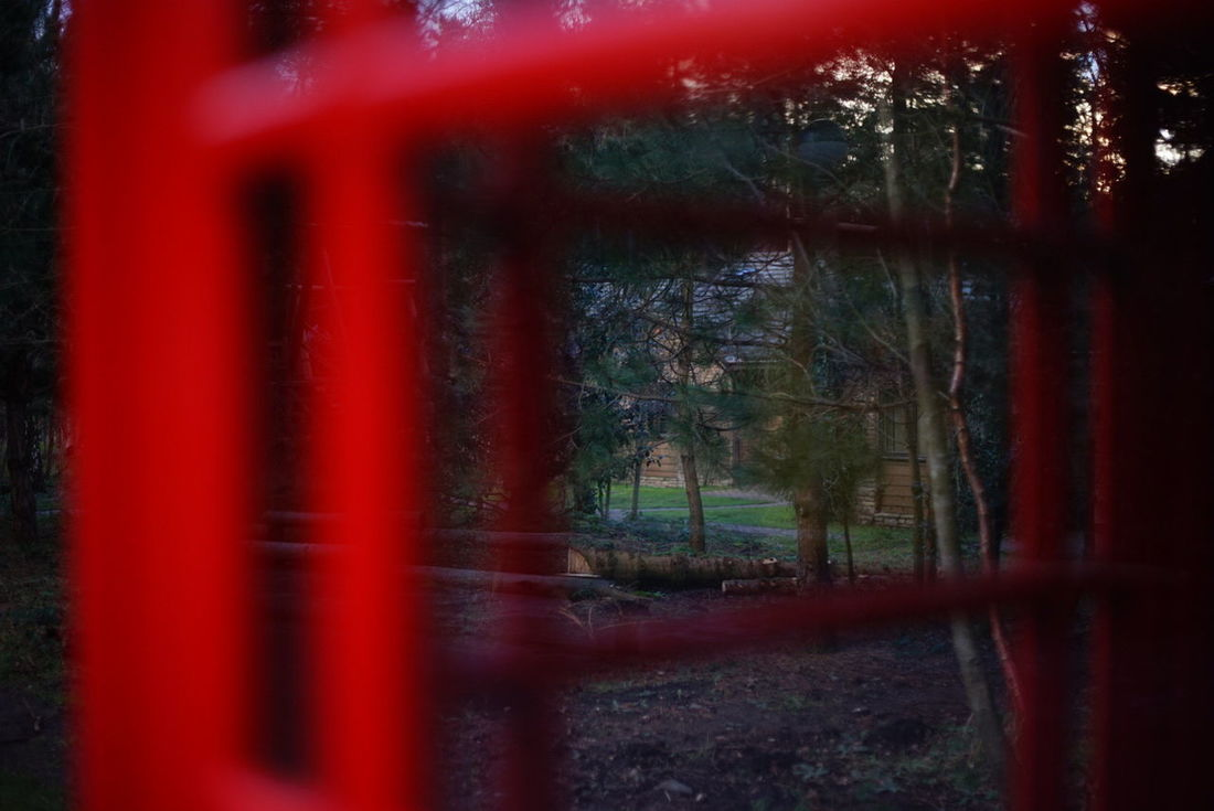 Red Tree Nature Forest Grass Photography Nature Photography Beauty In Nature Davidson's Photography Postbox Shape A7 Sony
