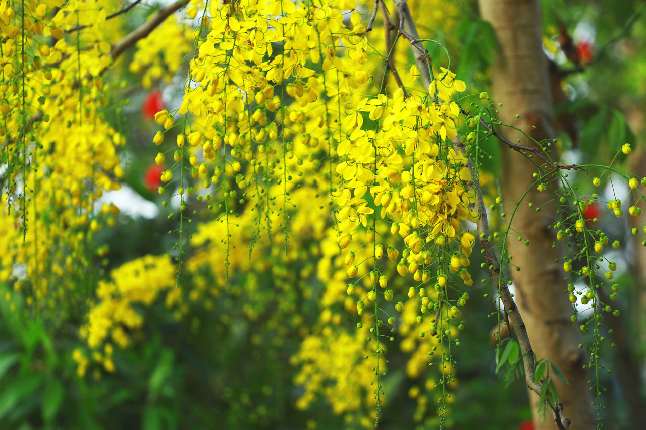 6D Beauty In Nature Canon Close-up Freshness Growth Kerala Kerala The Gods Own Country ;) Nature Traditional Yellow