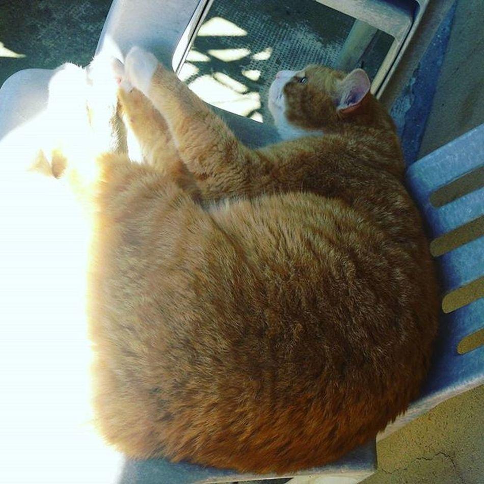 Romeo Cat Gatto Rosso Gattorosso Gattone Cat_of_instagram Catoninstagram Kitty Maio Meow Orangecat 😚