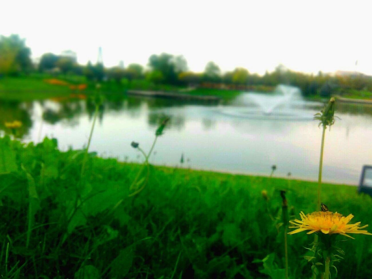 Günaydın Karahindiba TurkiyekareleriCheck This Out Taking Photos Hello World Yellow Flower Walking Around Goodmorning :) Taraxacum Plantography Bokeh Photography Bokeh Bokeheffect Bokehphotography Bokehphoto Focus Object Focus On Taraxacum Officinale Sarı Sarı çiçek Ankara/turkey Flower Photograph Çiçekler Güzeldir 🎈🎈🎀💕 Tazelik Flower Photography Springtime