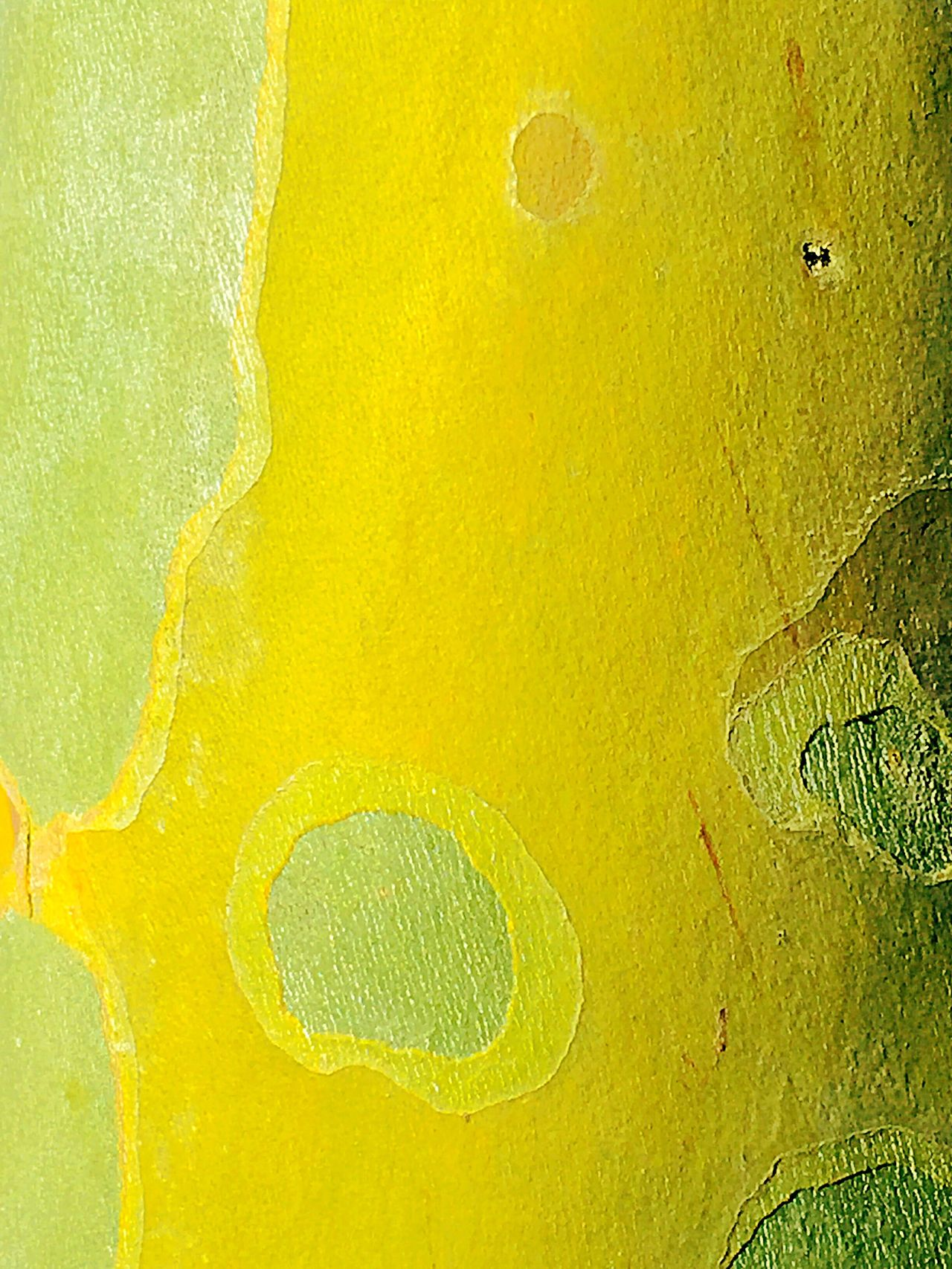 Smooth Curves: Bark Texture Australia Trees TreePorn Tree Bark Bark Texture Bark Texture Background Tree Closeup Nature_perfection Tree Trunk Naturephotography Yellow Bark Green Bark Unique Bark Smooth Bark Naturecolor