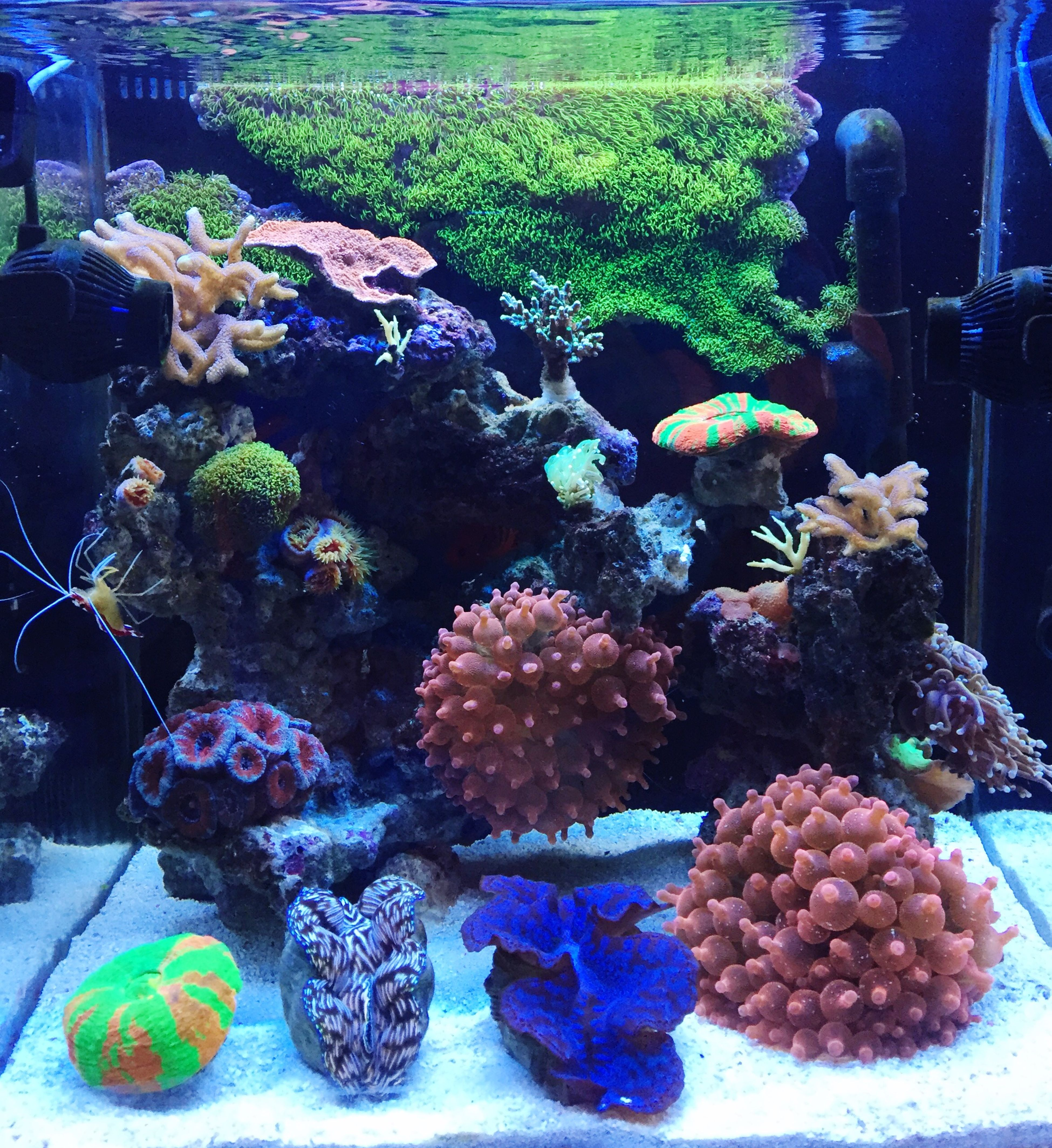 Coralreef Lps Tank