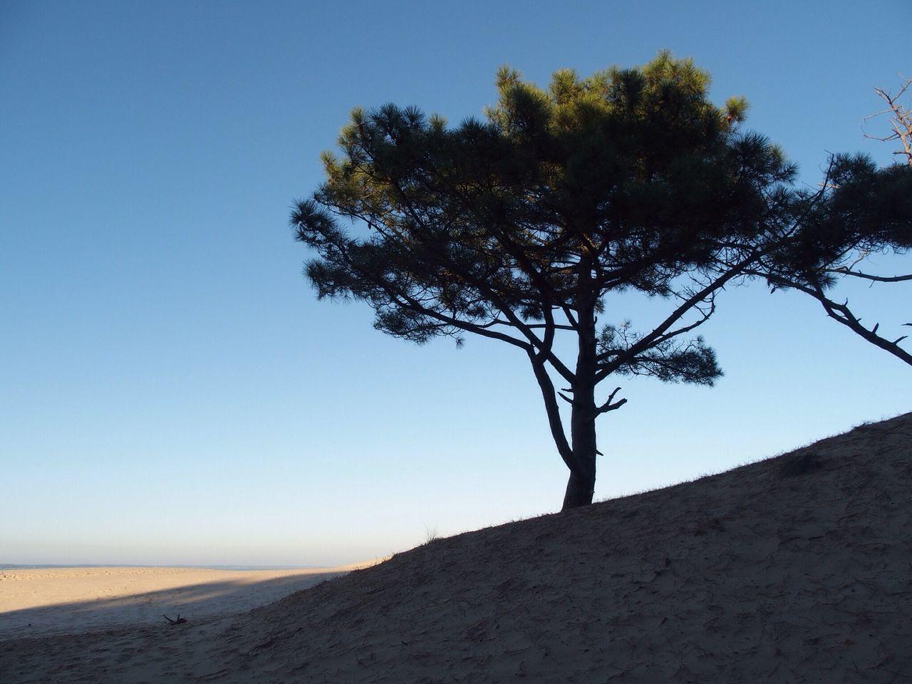 Tree Nature Tranquil Scene Outdoors Clear Sky Beauty In Nature No People Sky Naturelovers Sand Beach Dune Du Pyla Dunes Dunescape Dunedupilat Dune Du Pilat Arcachon Dune