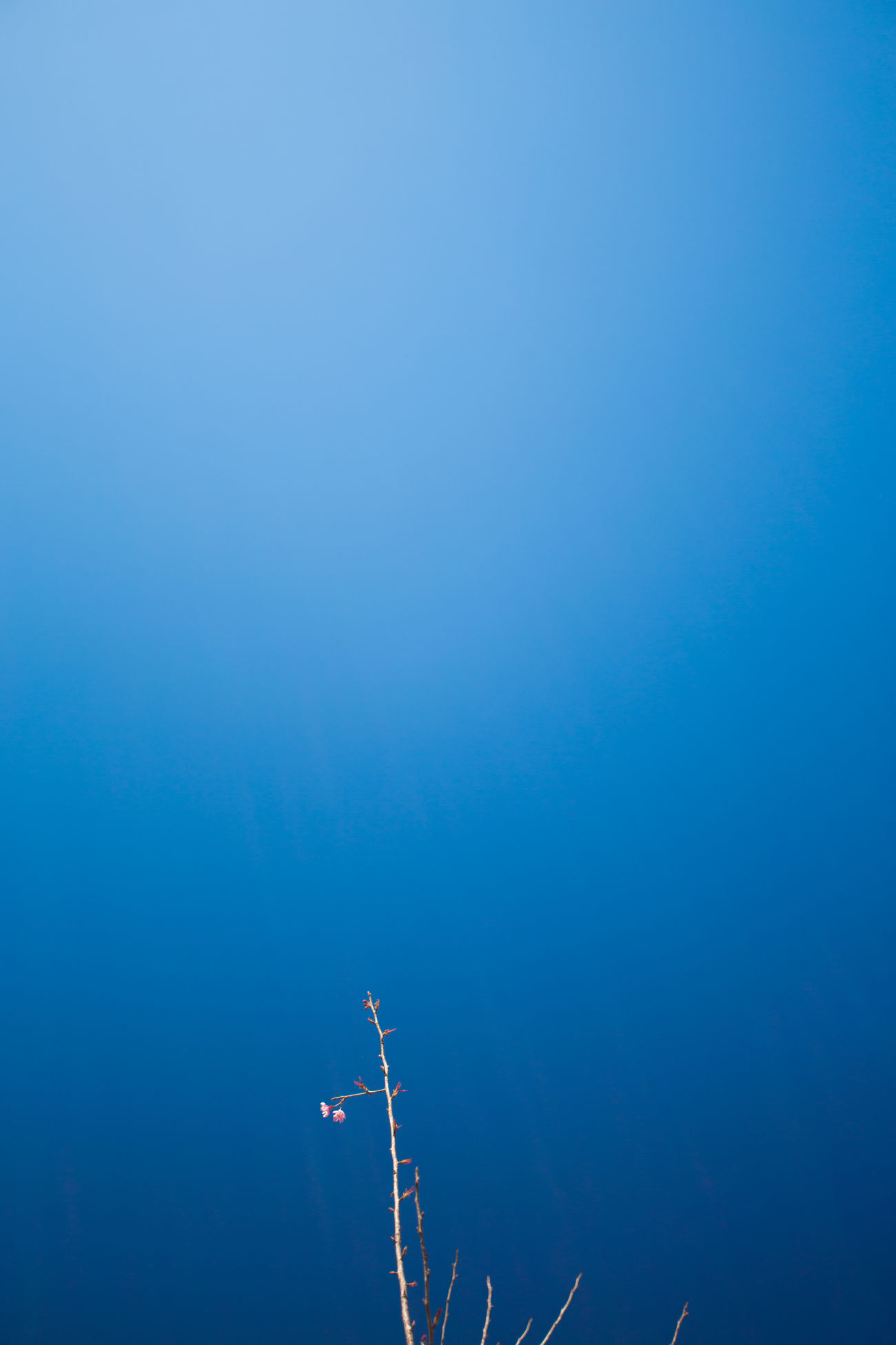 Beautiful stock photos of sky, blue, copy space, low angle view, clear sky