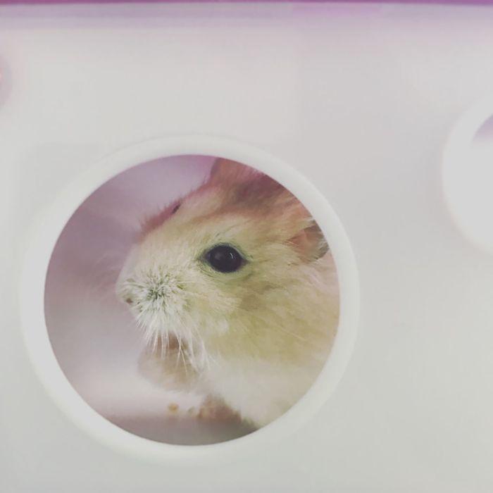 EyeEm Selects Hamster Love One Animal Hamster Pets
