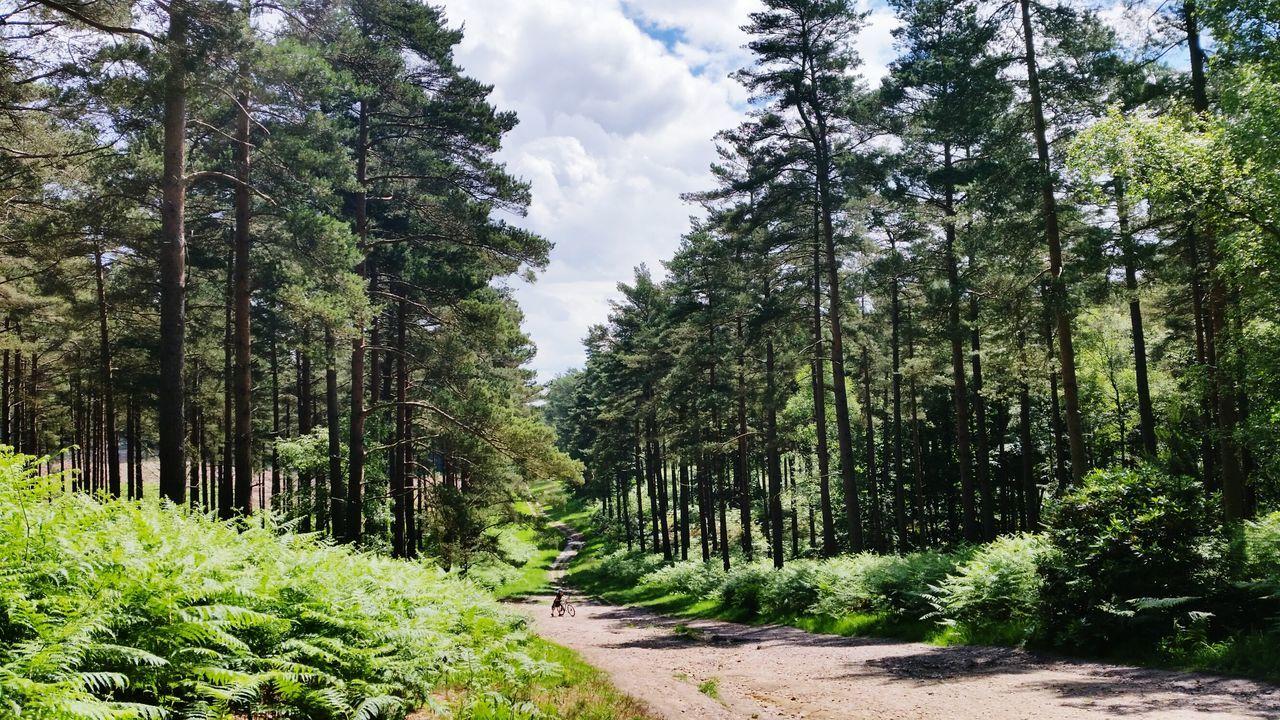 way up. 🚴💙 Bike Bike Photography Bike Ride Nature Nature Photography Silence Of Nature Swinley United Kingdom
