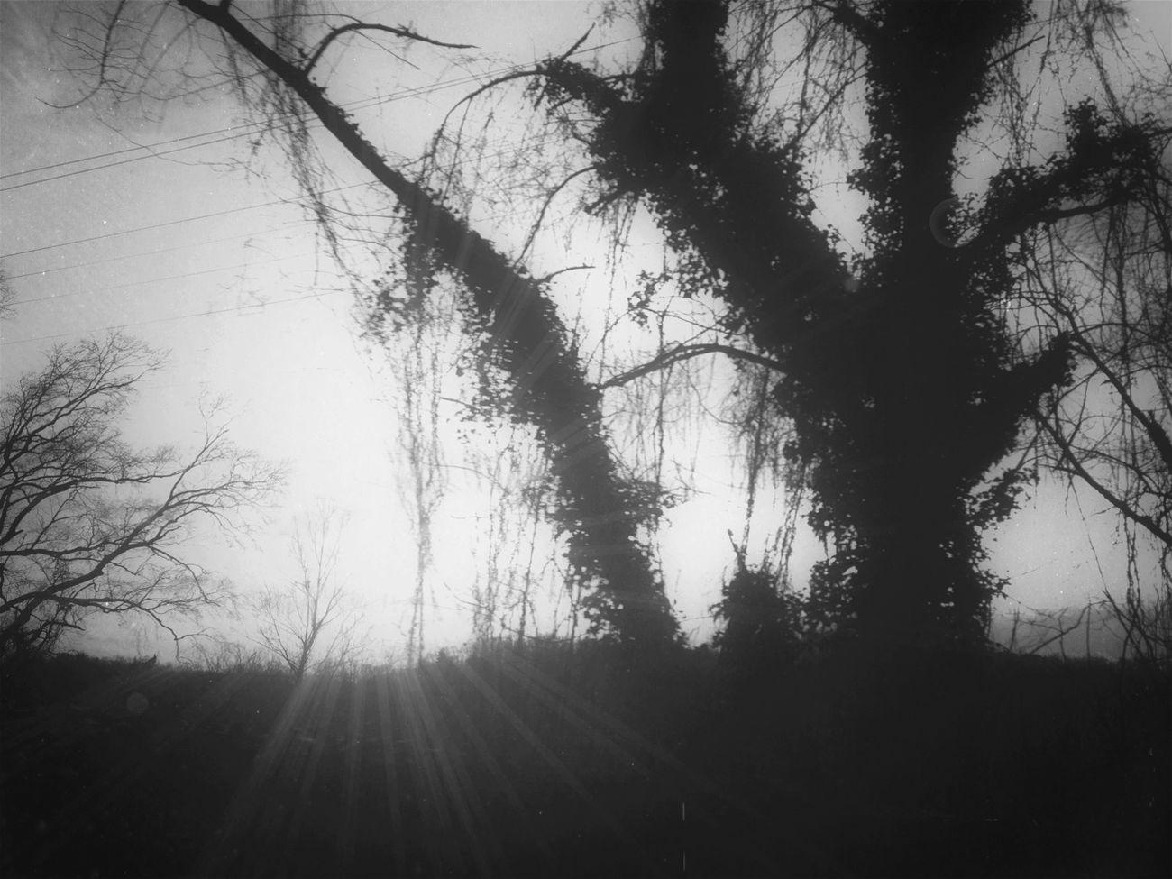 Blackandwhite Landscape Trees