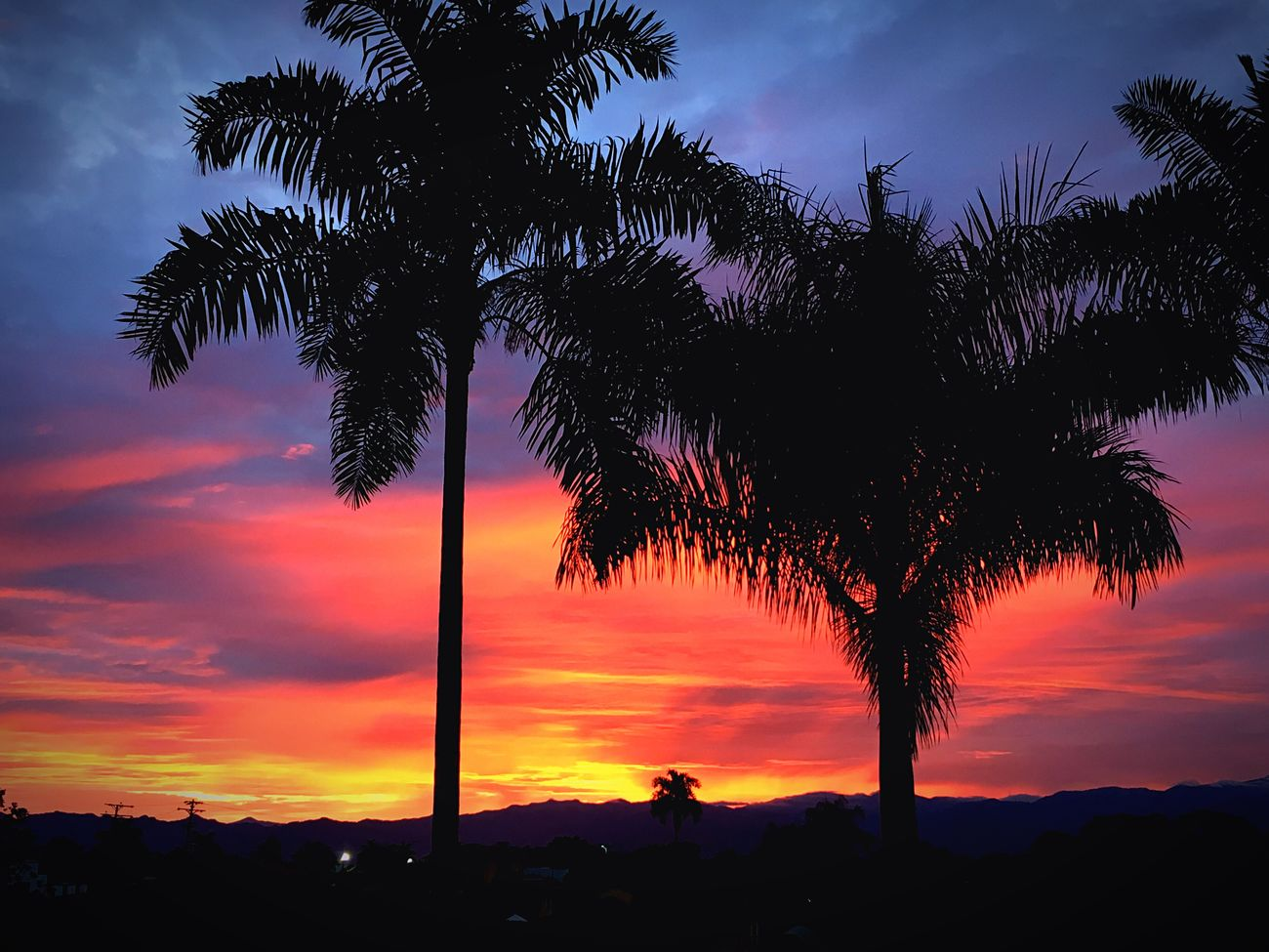 Sunset Beauty In Nature Tranquil Scene No People Nature Silhouette Growth Outdoors Palm Tree Tranquility Blowmeaway Asher