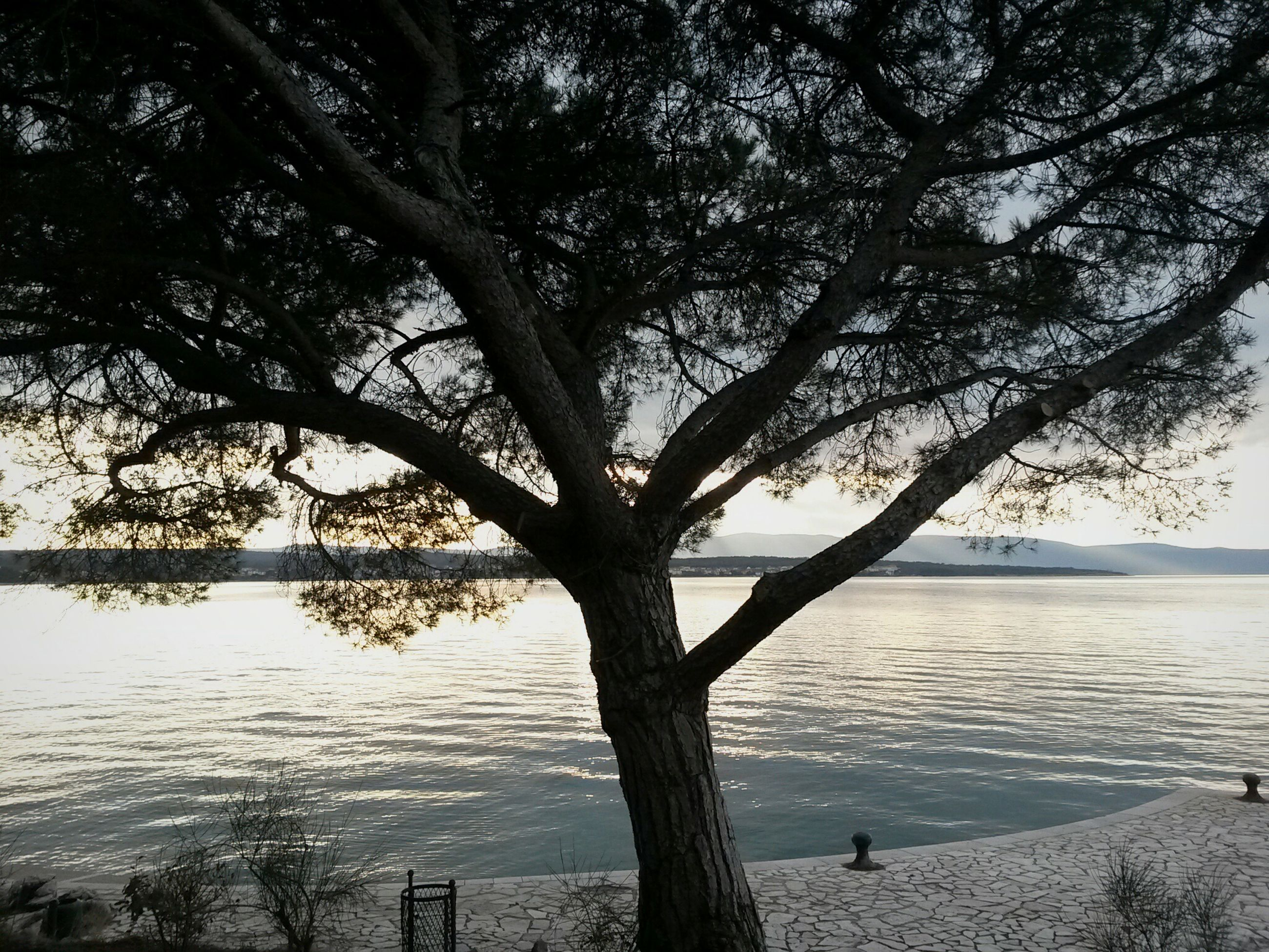 tree, water, branch, tranquility, tree trunk, sea, tranquil scene, nature, beauty in nature, scenics, beach, sky, shore, lake, growth, outdoors, day, sunlight, horizon over water, idyllic