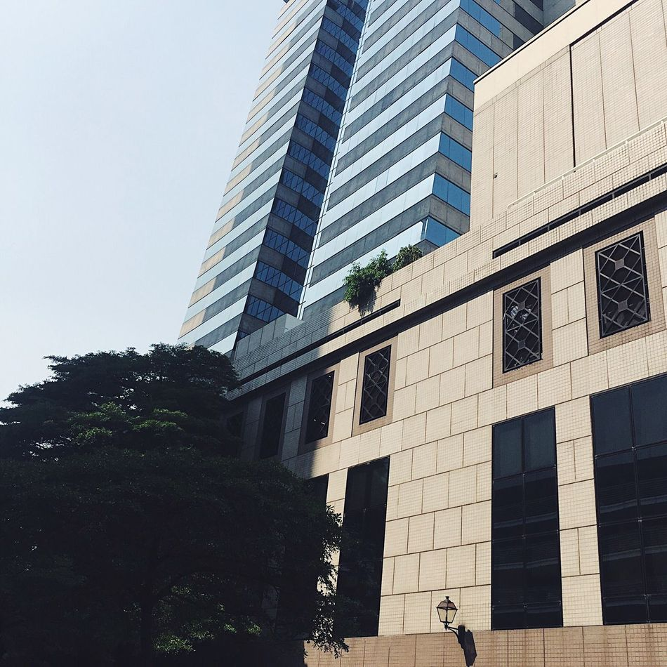 Architecture Built Structure Building Exterior Low Angle View Skyscraper City Modern Tree Window Outdoors Day City Life Façade Sky No People Clear Sky