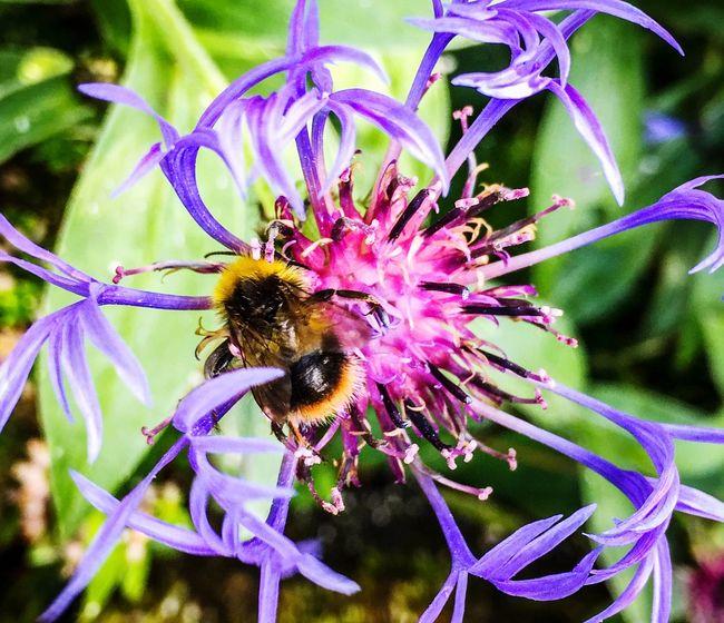 Busy bee season