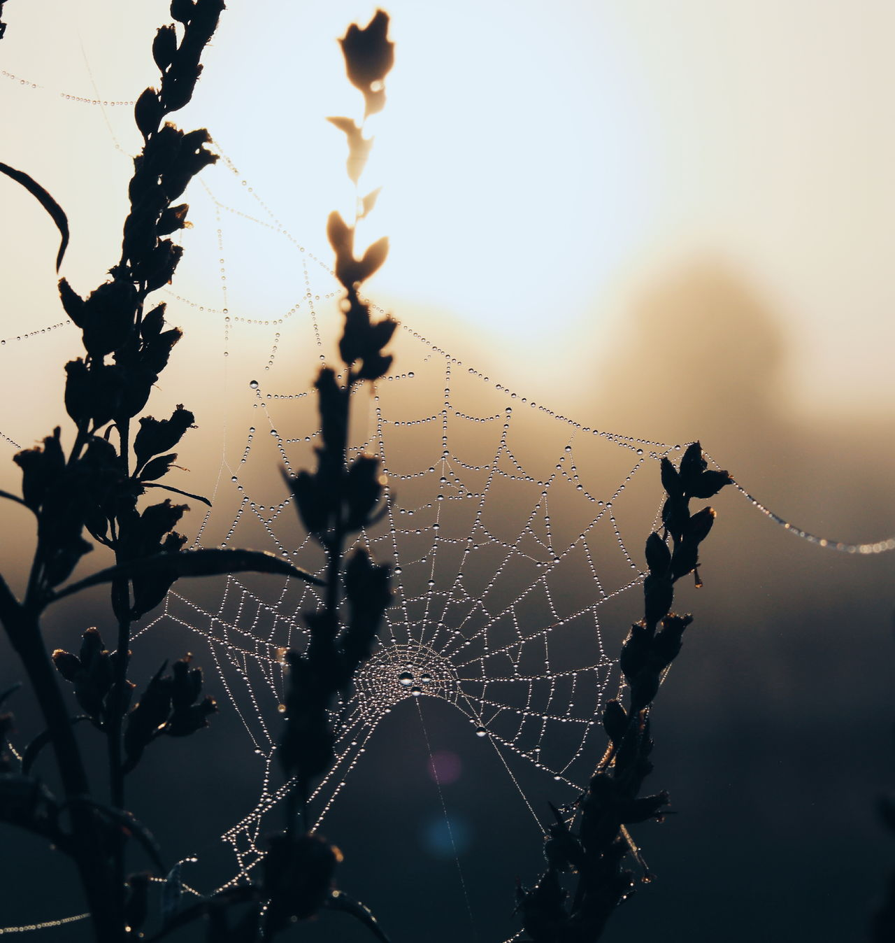 Drop Water Close-up Beauty In Nature Dew Silhouette Focus On Foreground Spider Web Autumn Natural Condition EyeEm Best Shots EyeEm Deutschland Eye4photography  EyeEm Nature Lover Fog Outdoors Sunlight Tranquil Scene Landscape Beauty In Nature