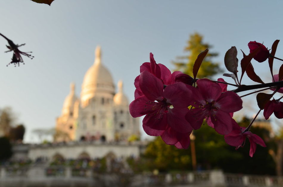 #nofilter#noedit #Paris #france  #sacrécoeur #sunset #sun #clouds #skylovers #sky #nature #beautifulinnature #naturalbeauty #photography #landscape Architecture Built Structure Day Flower Nature Outdoors Religion Sky Tree