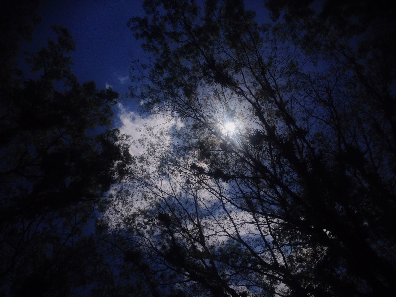 Nature Vacations Sky Tree Sun