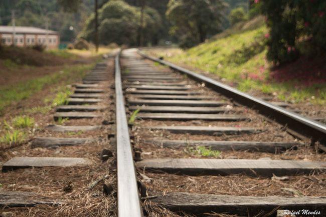 Train Camposdojordao Train