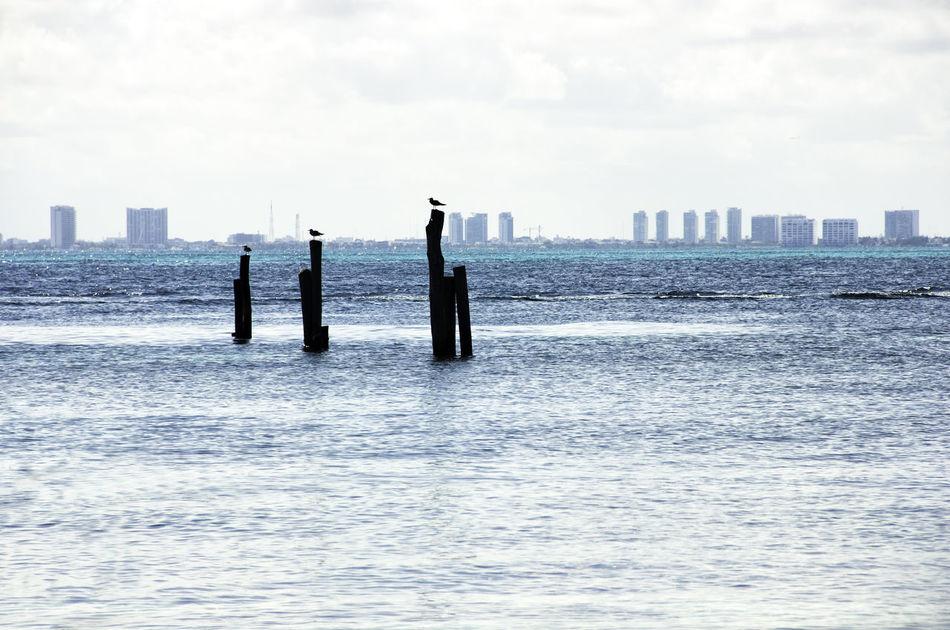 Three little birds #birds Beach Cancun IslaMujeres Nature Nature Photography Paisaje Sea And Sky Travel Trip