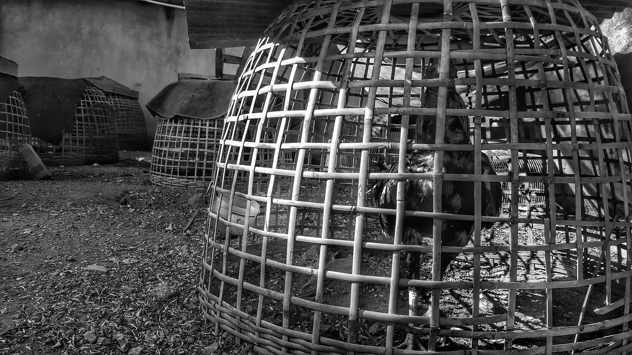 No People Outdoors Morning Light Black And White Photography Monochrome Photography Monochrome Black & White Backgrounds Chickens Chicken Feeding Chicken Feed Cage Caged Freedom Chicken Cage Jail Freedom Prison Prison Cell Prison Bars