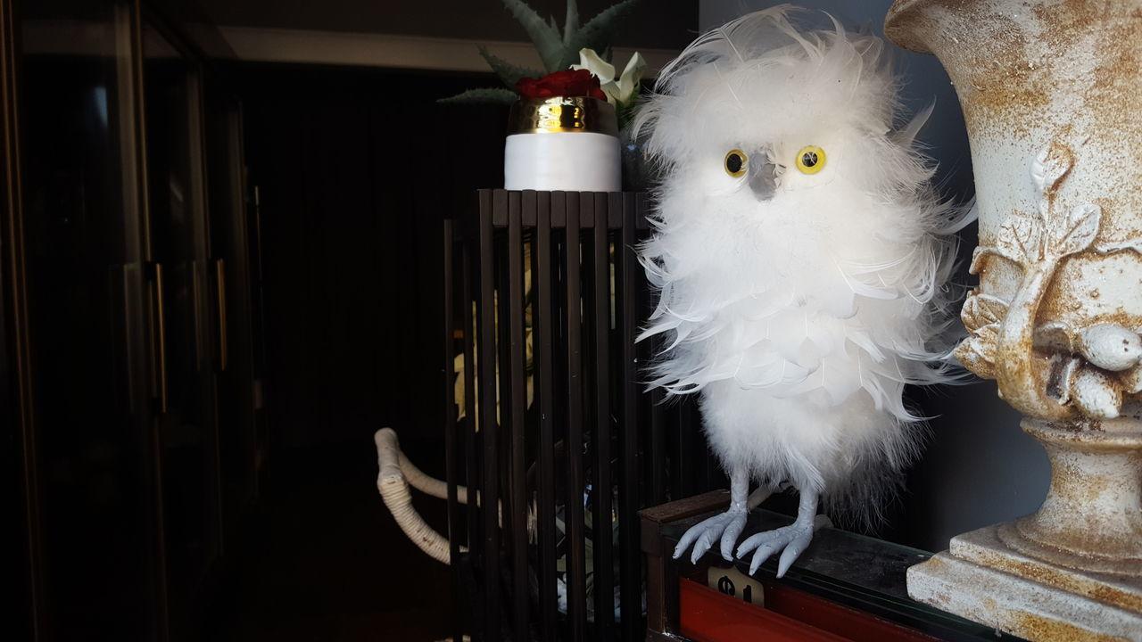 Birds Bird Photography Bird Feather  Feathers Cuteness Cute Bird🐥 White Bird Christmas Decoration Decorations Nature_collection Birds_collection Birds Of EyeEm  Birds🐦⛅ Birds Of EyeEm  Birds Of EyeEm  Eyes Eyes Watching You