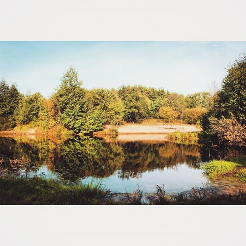 РекшиОсень😜❤☀🔥 осень осенний_лес природный_фотоспам Природа рекшино
